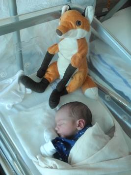 do porodnice mohly i lišky